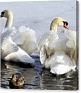 Swans And Duck Canvas Print