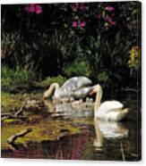 Swans And Signets Canvas Print