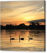 Swans At Dawn Canvas Print