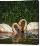 Swans In A Pond  Canvas Print
