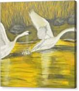 Swans In The Fall In Montana Canvas Print