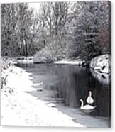 Swans In The Snow Canvas Print