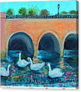 Swans On The Charles River Canvas Print