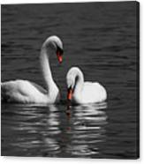 Swans Swimming Isolation Canvas Print