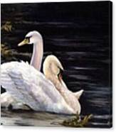 Swansong Canvas Print