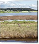 Swantown Lake Estuary Canvas Print
