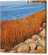 Swath Of Gold In Centerport, New York Canvas Print