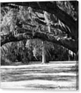Swaying Oak  Canvas Print