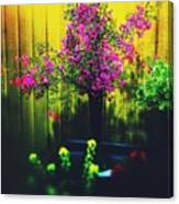 Sweet Boronia Canvas Print