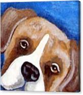 Sweet Boxer Portrait Canvas Print