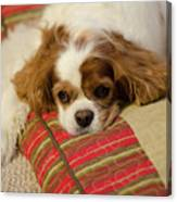 Sweet Dog Face Canvas Print