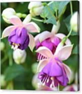 Sweet Fuchsia Flowers Canvas Print