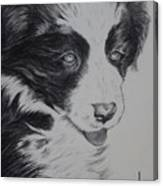 Sweet Girl Border Collie Puppy Canvas Print