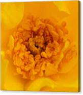 Sweet Heart Of Yellow Rose Canvas Print