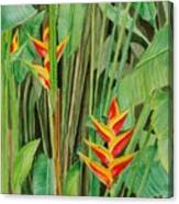 Sweet Heliconias Canvas Print