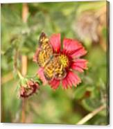 sweet Nectar Canvas Print