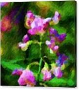 Sweet-pea Kinda Feeling Canvas Print