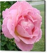 Sweet Peach Rose Canvas Print