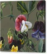Sweet Peas And Violas Canvas Print