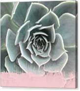 Sweet Pink Paint On Succulent Canvas Print