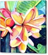 Sweet Plumeria 2 Canvas Print
