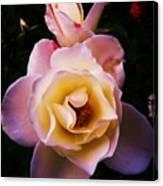 Sweet Rose Canvas Print