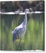 Sweet Sandhill By The Pond Canvas Print