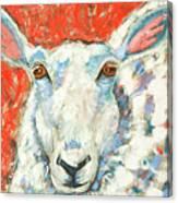 Sweet Sheep Canvas Print