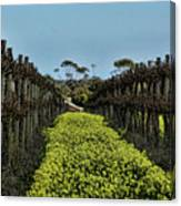 Sweet Vines Canvas Print