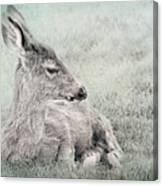 Sweet Young Deer Canvas Print