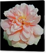 Sweetheart Rose Canvas Print
