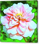 Sweetheart Rose On A Sunny Day Canvas Print