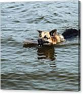 Swimming Dog Canvas Print
