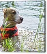 Swimming Family Dog Canvas Print