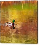 Swimming In Reflections Canvas Print