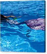 Swimming Mermaid Canvas Print