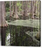 Swirls In The Swamp Canvas Print
