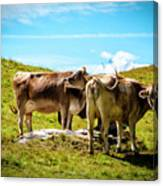 Happy Swiss Cows Canvas Print