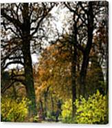 Swithland Woods, Leicestershire Canvas Print