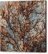 Sycamore Against November Sky Canvas Print