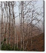 Sycamore Canyon Trail In Rain Canvas Print