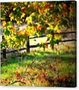 Sycamore Grove Fence 2 Canvas Print