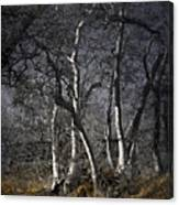 Sycamore Grove Canvas Print