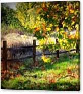Sycamore Grove Series 11 Canvas Print