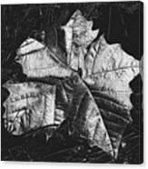 Sycamore Leaf Digital Canvas Print