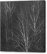 Sycamore Series 1 Canvas Print
