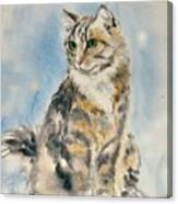 Tabby Cat Canvas Print
