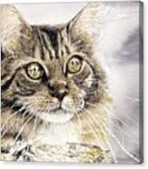 Tabby Cat Jellybean Canvas Print