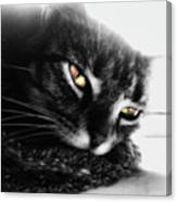 Tabby Cat Selective Color Canvas Print