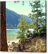 Tahoe Pines Canvas Print